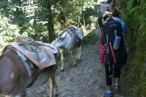 Day 7: Trek from Chame to Pisang (3,300m)